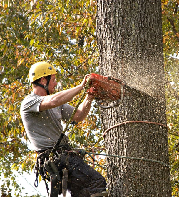 About Tree service long island