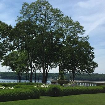 tree service long island